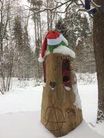 Mošķu mežs ziemā